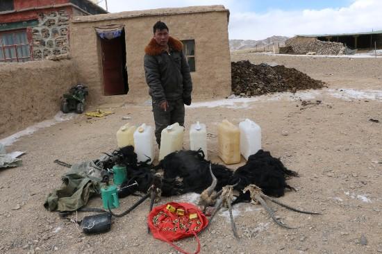 西藏开展野生动物保护清网行动 行程9300公里巡护羌塘