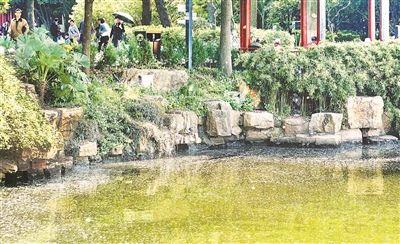 气温不断上升 南京白鹭洲湖面漂浮毛絮