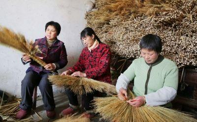 南通海安严马村将高粱苗子变废为宝 带动致富