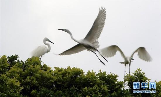 (XHDW)(1)香港彭福公园:白鹭的乐园