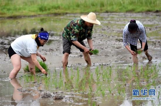 龙岩客家古村培田村:大山里的客家农耕节