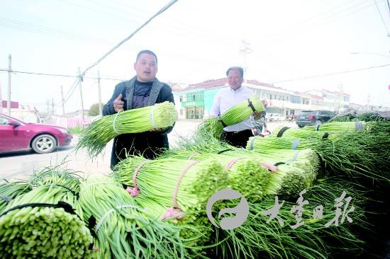 盐城大丰蒜薹销往上海苏州等地 收购价每斤4元