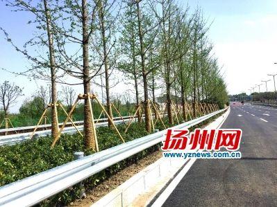 扬州3条城市大通道部分路段开放 缓解交通压力