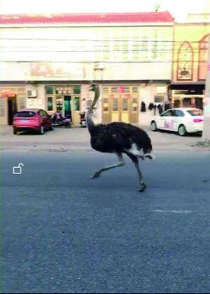 被追赶奔跑的动物