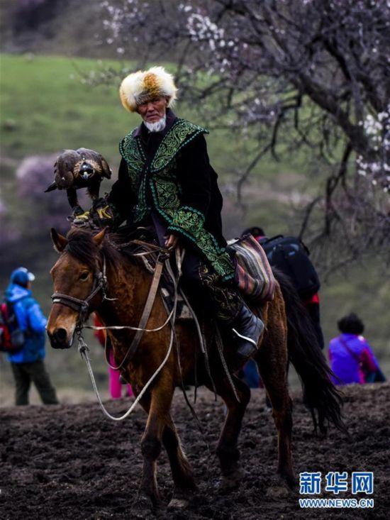探访新疆千年遗存的原始野杏林(组图)