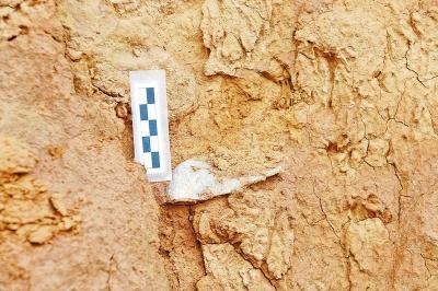 灵宝贾村旧石器地点发现的人工石器 河南省文物考古研究院供图<p align=