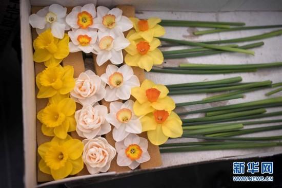 [6](外代二线)英国哈罗盖特花卉展开幕