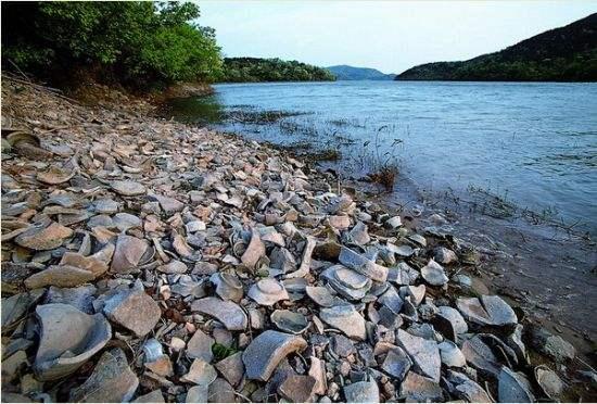 浙江慈溪的上林湖畔遍地青瓷碎片