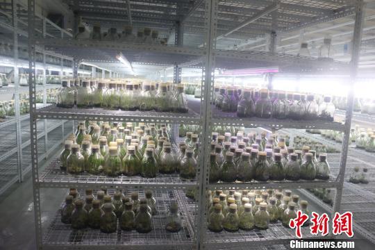 台商在广西创业带动农户致富产品出口东盟