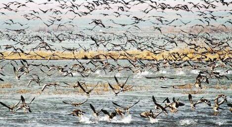 候鸟迁徙群