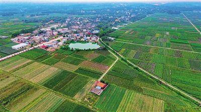 定安龙州洋瓜菜生产基地 科技兴农 抱团致富
