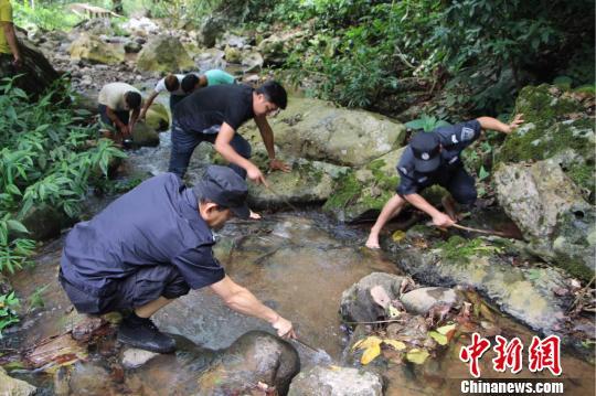 """游客在西双版纳放生""""生态杀手""""鳄龟 涉嫌违法将被罚"""