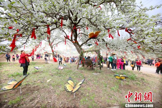 """抚顺梨花谷2.8万亩梨花妆点辽东""""最美的春天"""""""