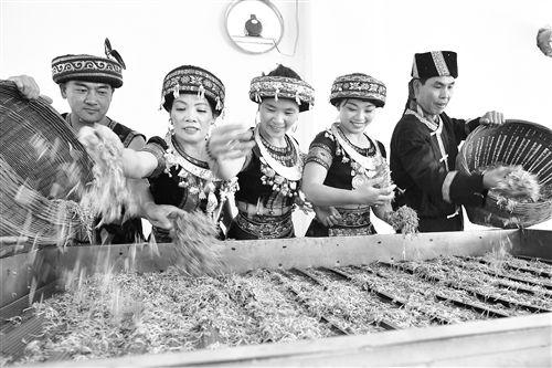 马山・古寨瑶乡第五届金银花节举行