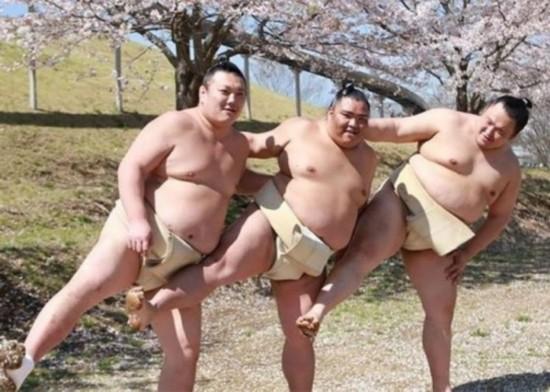 爱美之心人皆有之!日本相扑樱花树下拍写真妖娆妩媚