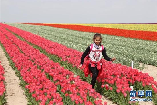 土耳其花商家族的郁金香梦