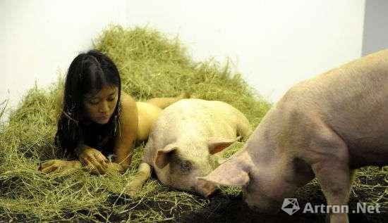 行为艺术家Miru Kim和猪一起生活