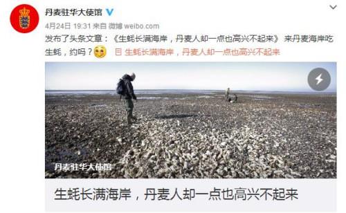 """丹麦生蚝成灾 网友:""""我们能把它吃成回忆"""""""