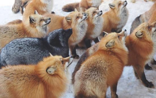 """动物天堂!细数全球被动物""""占领""""的胜地(图)"""