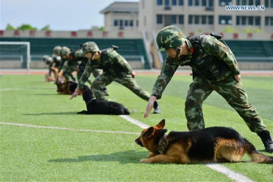Police Dogs Trained At Training Base In Sw China 7