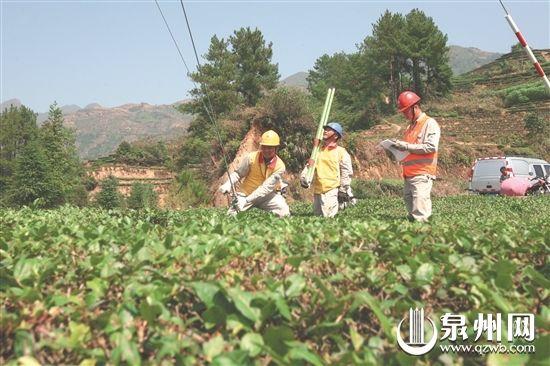 电力部门工作人员在茶园检查供电线路