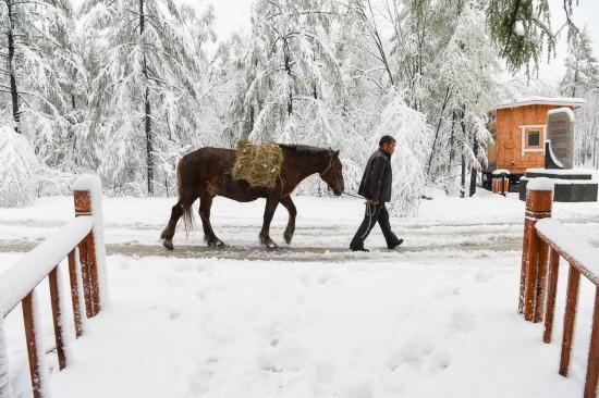 5月6日拍摄的内蒙古毕拉河林业局达尔滨湖国家森林公园雪景。 新华社记者 连振 摄