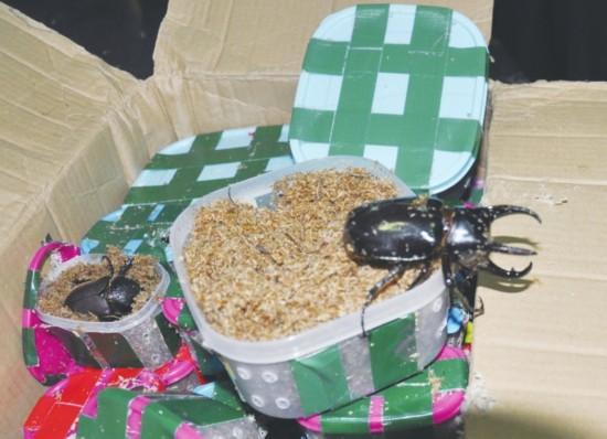苏州海关连续三次截获整箱活体昆虫