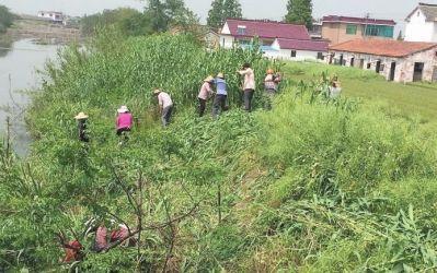 南通海安多地推进环境整治 建设美丽乡村