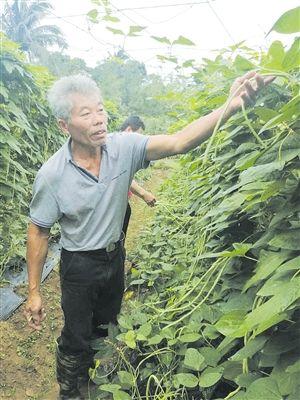 夜校+种植技术培训 贫困户变身瓜菜种植大户