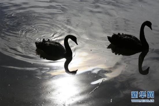 [2](外代二线)光影黑天鹅