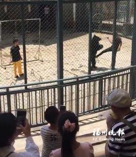 驯兽员踢打黑熊吓坏小孩 福州动物园:已被停职--福建