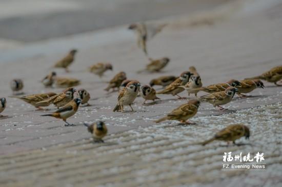 """从厌鸟到爱鸟 福州""""鸟叔""""喂野鸟10年风雨无阻"""