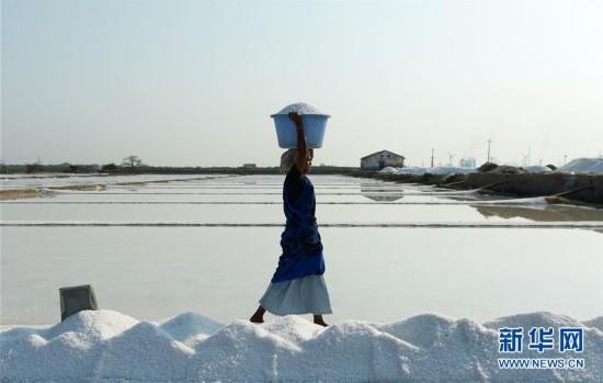 印度盐场打工者