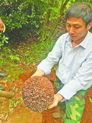 厦门白蚁活动进入最频繁时期 当心入户筑巢