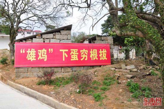 """漳州诏安太平镇:""""雄鸡""""下""""金蛋"""" 穷村变富一鸣惊人"""