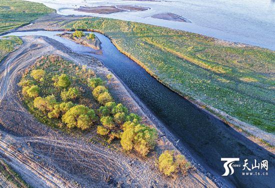航拍霍城伊犁河谷湿地 组图