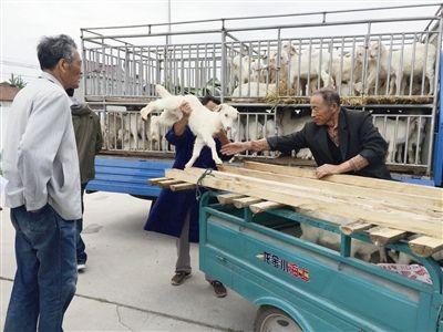 南通海门临江新区52户村民领扶贫羊