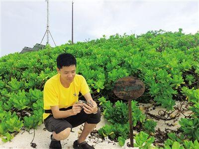 三沙七连屿:今年首批自然孵化的小海龟