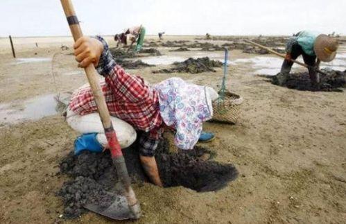 农妇泥地挖出虫子竟月赚5千 究竟是什么虫子有这么大的价值?
