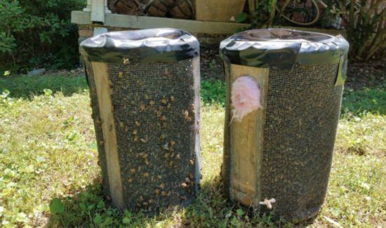 12万只蜜蜂藏卧室天花板 女子2年来未察觉