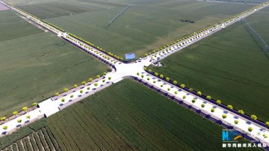 【航拍】河南小麦主产区丰收在望