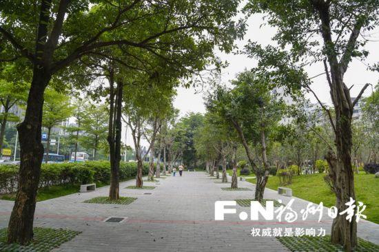 城区年初以来种下3万多棵大树