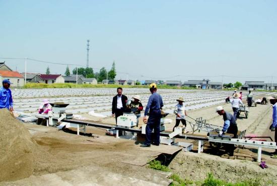 盐城盐都郭猛镇水稻插秧机械化水平达83%