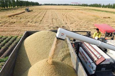 南通海门十多万亩小麦陆续开镰收割