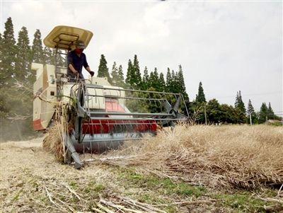 南通海门今年油菜机收面积超万亩 秸秆全还田