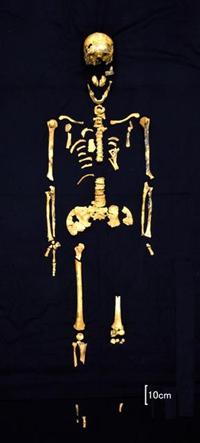 几乎可辨别全身骨骼的4号人骨。可推定此为一具身高为165.2公分,年事较高的男性骨骼=冲绳县立埋藏文化财中心提供