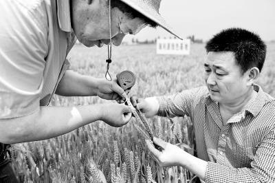 又到一年麦收季!河南8200万亩小麦收获在即