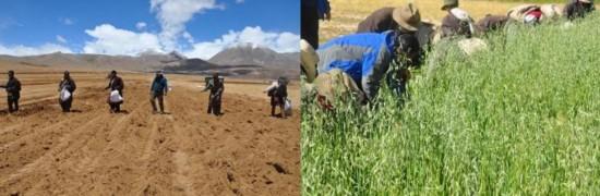 高原畜牧新成就优先生态安全落地实用技术