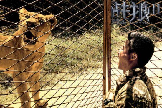 吴京跟非洲狮子脸贴脸 被15名保镖押进贫民窟   2017年,《战狼2》剧组重返非洲开始拍摄。第一站,就遇到了最凶的拍摄对象狮子。想要拍狮子,先得把我们自己锁紧笼子里。 在拍摄一场狮子捕食的戏时,驯兽员被狮子咬伤,不幸挂彩。现场的气氛更加紧张起来,因为如果一旦惹怒狮子,所有这些护栏,都是没有用的。除了狮子,非洲草原上巴掌大的毒蜘蛛更是偷袭了剧组七八个工作人员,摄影师深夜半身麻痹,被抬进医院抢救,非洲拍摄的危险可见一斑。   贫民窟周围不能停车,你对里面拍照的时候,随时有可能伸出一