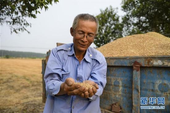 泰州姜堰区家庭农场主:今年夏粮价格高于去年